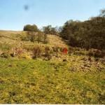 Cruach Mor Site 4