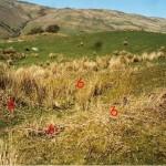 Cruach Mor Site 6
