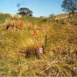 Cruach Mor Site 5