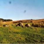 Cruach Mor Site 8 Stones