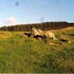 Cruach Mor Site 10 Stones