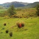 Cruach Moine Phuill Site 2