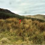 Cruach Moine Phuill Site 7