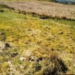 Cruach Mor Site 7 Stones