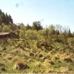 Cruach Mor Site 1