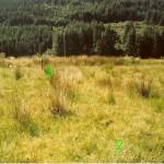 Creag Na Sceithe -  Cnocan Sceithe Site 1 SW