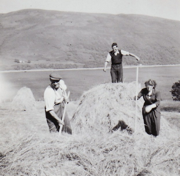 Hay Making Couston 1952
